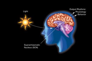 Is the sun's affect on circadian rhythms due to vitamin D production?