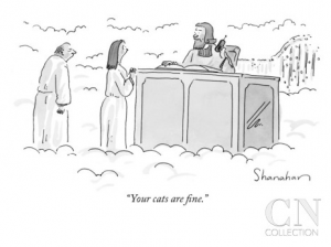 your cats are fine