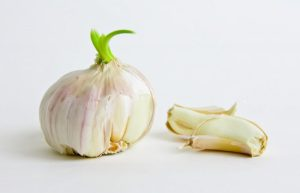 sprouting garlic