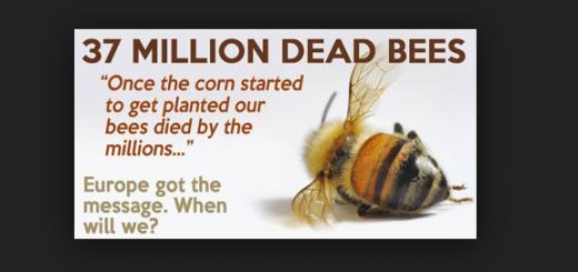 gmo-bees